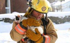 Ramon, el gato que unio dos municipios