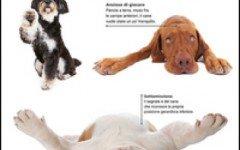 Dog Decoder Come interpretare il linguaggio segreto dei cani