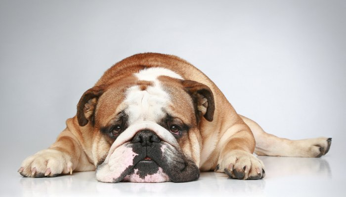 A lazy dog that is well fed, stimulated, and gets enough exercise is just lazy as part of his nature. However, laziness can also indicate something else.