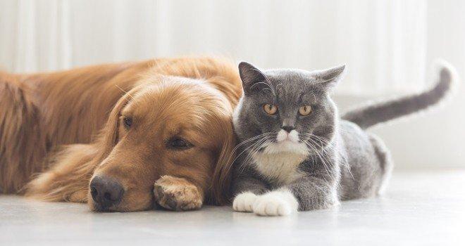 oli essenziali per cani