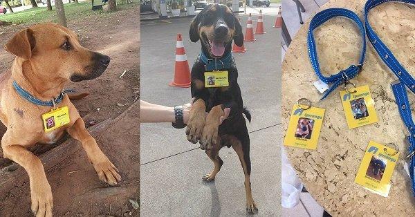 Tres inseparables perros trabajan en una gasolinera