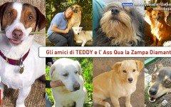 Aiutiamo Teddy, ospite di Qua la zampa Diamante