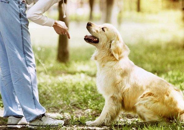 Como enseñar a un perro: educa a tu mascota