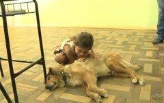 Amarelo, il cane randagio che vive in una scuola
