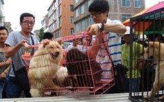 Increiblemente aumenta el consumo de carne de perro