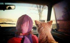 Animali in vacanza in macchina: come farli viaggiare