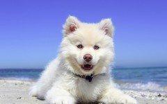 Castrar perro: importancia y beneficios de la castracion castrar un perro