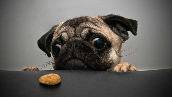 El perro y la galleta: recetas de galletas caseras para perro
