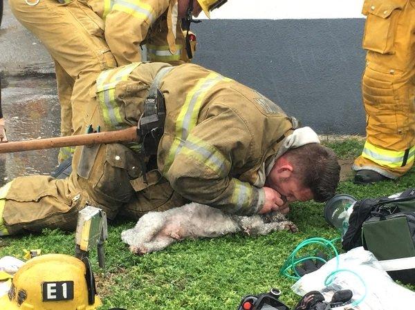 Bombero salva vida a perro practicándole RCP