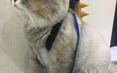 Bone Bone, il gatto più morbido del mondo