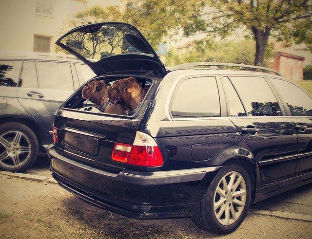 Assicurazioni per animali in auto: quanto costano?