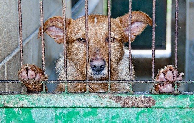 Taiwan: vietato il consumo di carne di cani e gatti