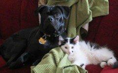 La storia di Opie e Roscoe: un cane che adotta un gatto