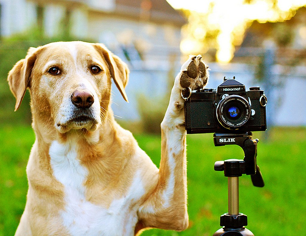Getting the best pictures of dogs requires you to be smart about it. In order to take a good photo, you basically have to train your dog for it.