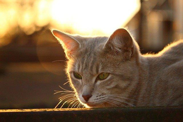 Animali in vacanza in camper: i problemi che possono avere
