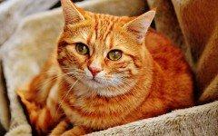 Come evitare che il gatto si annoi: i giochi alimentari