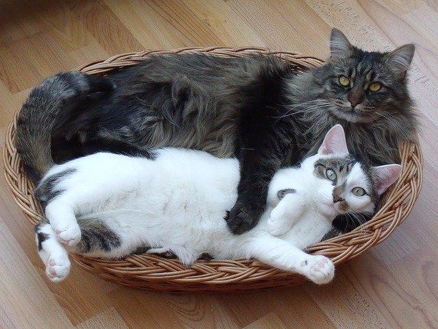 Chi è il miglior amico dell'uomo? Il gatto!