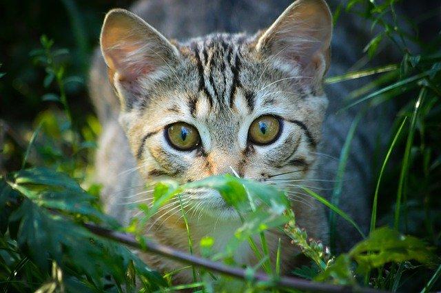 Alimentazione corretta del gatto, ecco i nostri consigli
