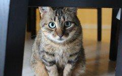 Gatti che non fanno le fusa, ecco le motivazioni