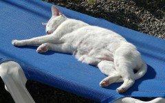 In vacanza con il gatto: quali sono le cose da non fare