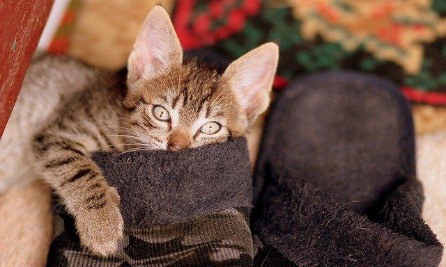 I 5 motivi che rendono i gatti divertenti: quali sono?