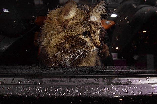 Accessori auto: quelli utili per portare in vacanza gatti