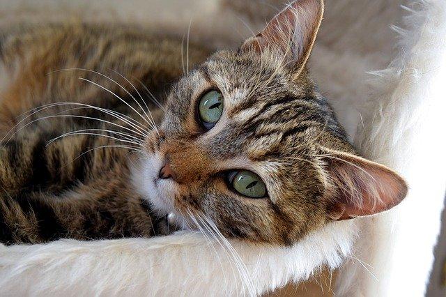 I gatti insegnano a vivere: ecco le lezioni di vita più importanti