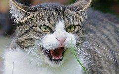 ¿Cómo calmar a mi gato enfadado?
