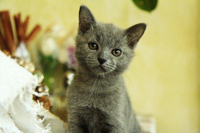 Alimentazione forzata del gatto: tanta pazienza e buona volontà