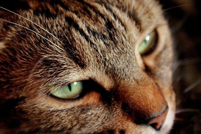 Gatto malato: cosa sono le fusa e perché le fa