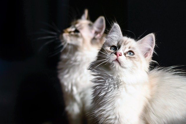 Alimentazione del gatto a 4 mesi: come deve essere