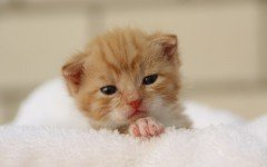 Gatos bebes: ¿cómo cuidar un gato pequeño?