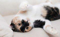 Primeros Auxilios Gato: indicaciones para practicarlos