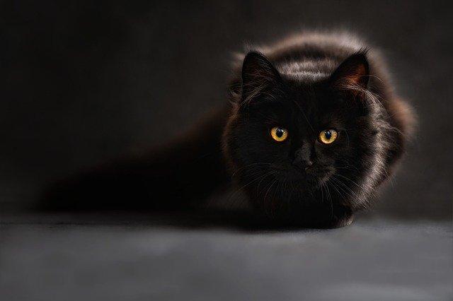 Il gatto nero di Poe: orrore e superstizioni