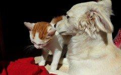 Avvelenamento da saponi nei cani e nei gatti