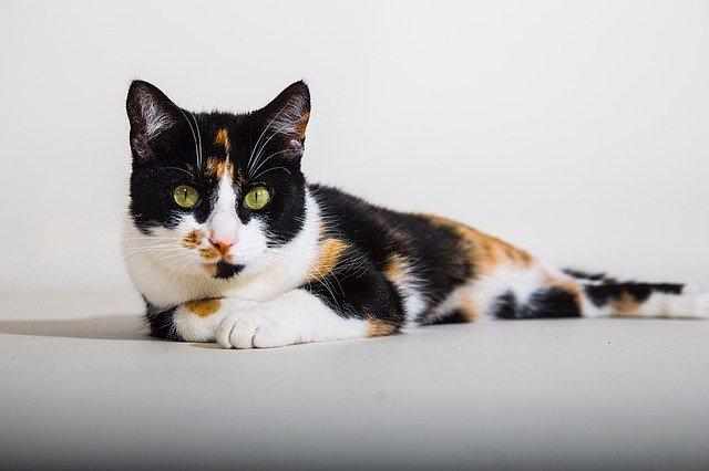 Perché il gatto non mangia? Le possibili motivazioni