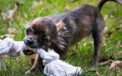 Le malattie trasmesse dal morso del cane, quali sono?