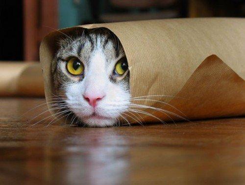 Rescatan gato atrapado en una malla de una Universidad