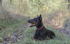 Lingua scura del cane: cause da valutare caso per caso