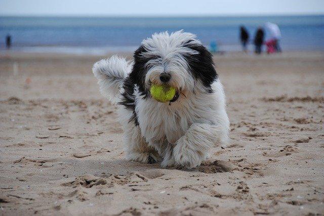 Giochi per cani all'aperto: quali sono i migliori?