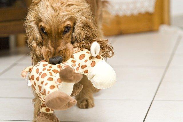 Regalo perro: ¿cuál es el mejor regalo para mi mascota?