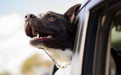 Accessori auto: quelli utili per portare in vacanza cani