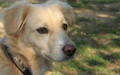 Cura della dermatite nel cane con rimedi omeopatici