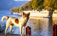 Vacanze con gli animali: visitare Riva Del Garda