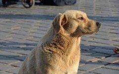Vacanze con animali: visitare la città di Lecce