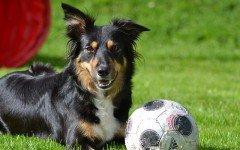 I migliori giochi per accudire un cane: quali sono? Scopriamolo!