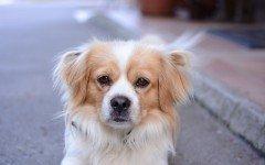 Malattie del cane paralisi: razze colpite, sintomi e cause