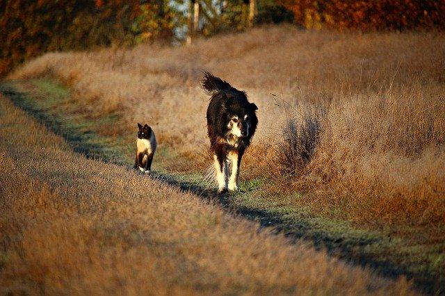 Cura del cane e del gatto con aloe vera: proprietà e benefici