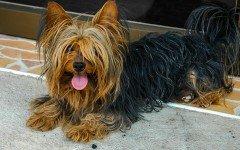 I cani che abbaiano di più: quali sono?