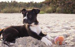 Giochi per cani a poco prezzo: quali sono?